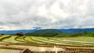 Terrace rice fields in Chiang mai,Thailand video