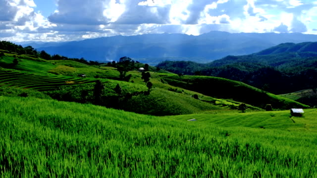 Terraced rice field on Mountain, Pa Pong Piang village, Chiang mai Province, Northern of Thailand video