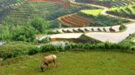 Terraced Rice Paddies In Northern Vietnam video