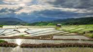 Terraced rice paddy field, Pa Pong Piang Chiang mai Thailand video
