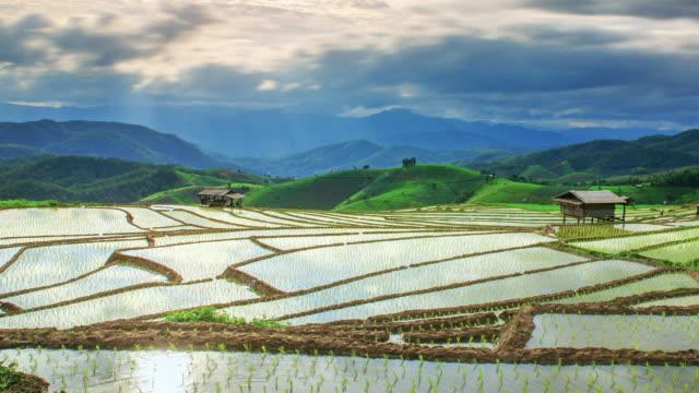 Terraced rice paddy field, Pa Pong Piang Chiangmai Thailand video