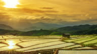 Terraced rice paddy field, Pa Pong Piang video
