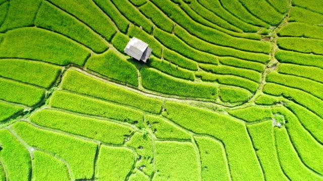 Terraced rice paddy field video