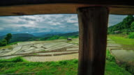 Terraced rice paddy field video