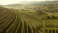 AERIAL Terraced rows of grapevine on sunny hillside video