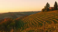 AERIAL Terraced vineyard in the fall video