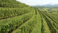 AERIAL Terraced vineyard on a sunny day video