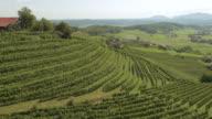 AERIAL Terraced vineyard on hillside in sunshine video