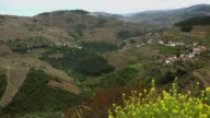 Terraced vineyards in Douro Valley, Alto Douro Wine Region in northern Portugal, officially designated by UNESCO as World Heritage Site video