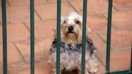 Terrier Dog video