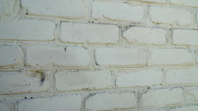 Texture of old brick wall background video