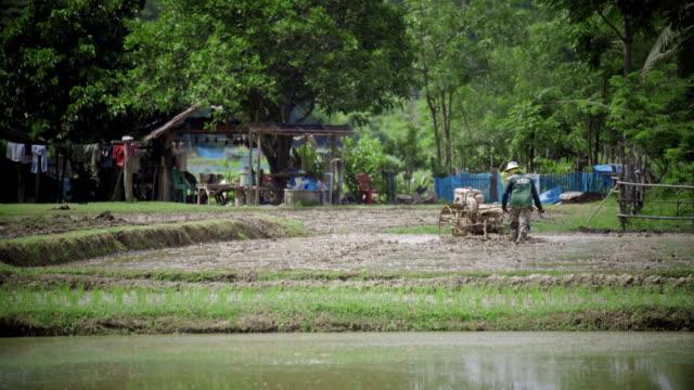 Thai farmer working in rice field video