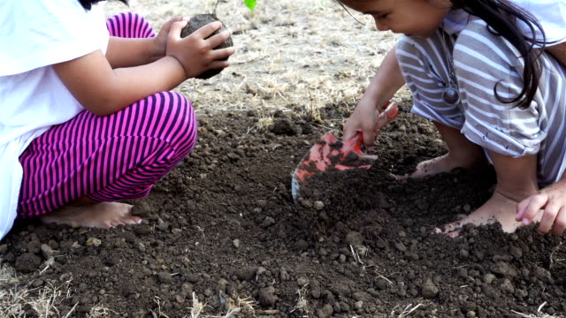 Thai little girl planting a tree at the ground, slow motion. Ecology concept. (Part 1) video