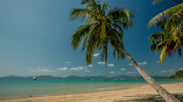 thailand summer day phuket famous beach palm tree panorama hd video
