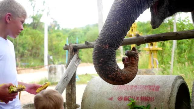 PHANGAN, THAILAND.Children feeding the elephant bananas video