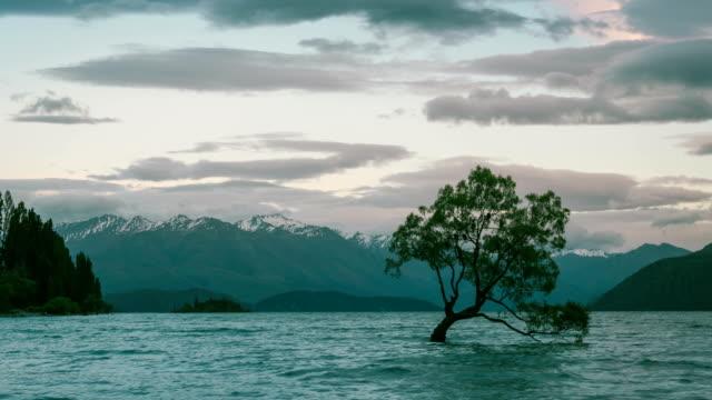That Wanaka Tree at Sunrise Time Lapse, Wanaka, New Zealand video