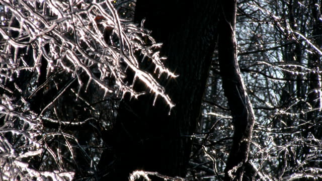 Thawing Branches video