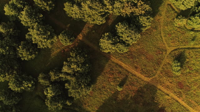 The aerial drone directly above view to the trails in the meadows near by the forest in the Pocono Mountains at the summer sunny evening. video