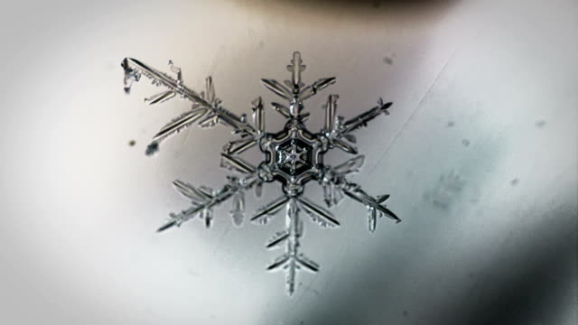 the appearance of lace snowflakes under a microscope video