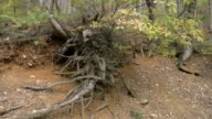 the bare roots of trees video