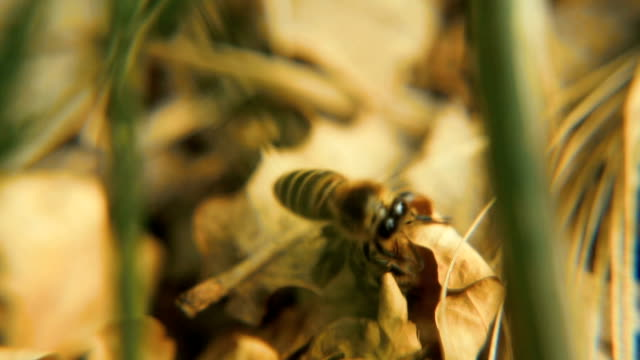 The bee is killed by a drone. Fighting. Close-up video