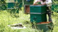 The bee-keeper behind work. video