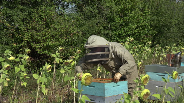 the beekeeper takes out a framework video