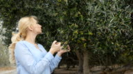 The blonde inspects branches with olives video