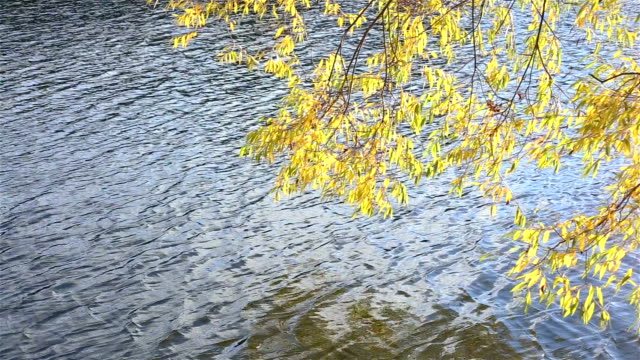 The branch sways in the wind over the water video