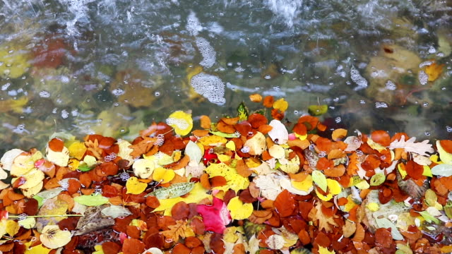 the bright colored autumn leaves on the water video