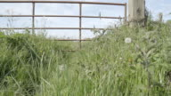 The British Countryside Field With Gate video