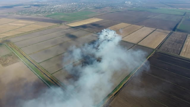 The burning of rice straw in the fields. video