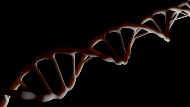 DNA. The camera flies around the DNA molecule. Genetic engineering scientific concept. The flying particles. On a black background. 3D animation. video