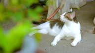 The cat video