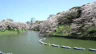 the cherry blossom at Chidorika-Fuji in Tokyo video