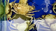 The crab animal. video