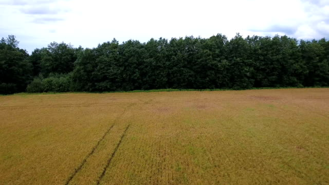 The crop field with the big trees on the end video