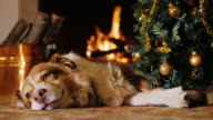 The dog lies near a Christmas tree on the background of a burning fireplace. We are preparing to celebrate New Year and Christmas video
