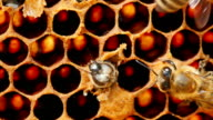 The emergence of a new life - a young bee flies out of the cell where she grew up. Second, it helps bee video