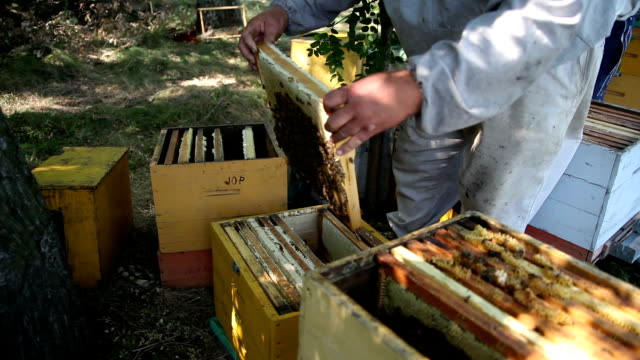 The Employee Selects the Apiary Bee Frames video