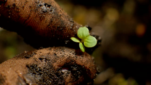 The Farmers Hands With Plant in The Earth video