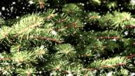 the fir tree branch video