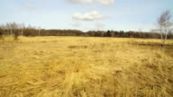 The flight over a field of yellow grass. video