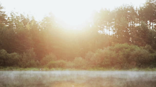 The fog floats over the water, lake. Beautiful morning landscape at the forest. Sun rays are shining video