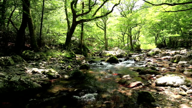 The fresh green of Odamiyama valley and the bridge in Japan video