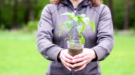 The girl holds plant of peppers in plastic cup. video