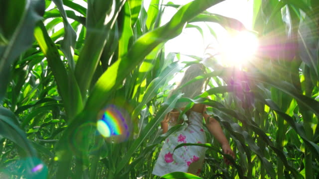 The Girl Runs Between the Rows of Growing Corn video