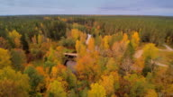 The greeny forest in Nommeveski Lahemaa video
