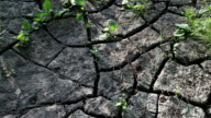 The Ground Cracked by Drought video