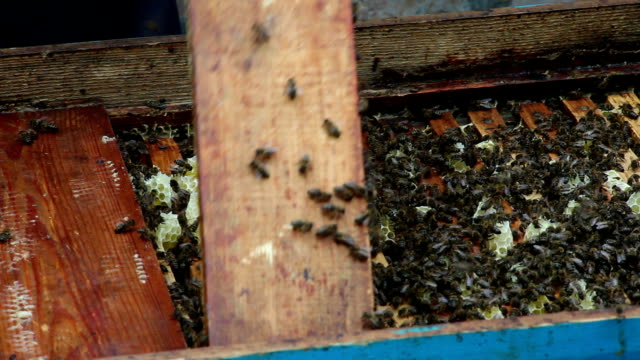 The Group of Bees in The Hive. Preparations Before Rocking Honey video